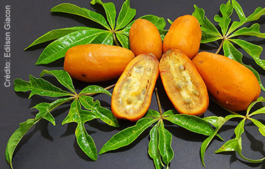 Jaracatiá plantas nativas